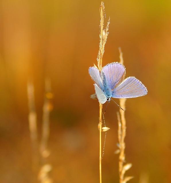 butterfly-1982860_640