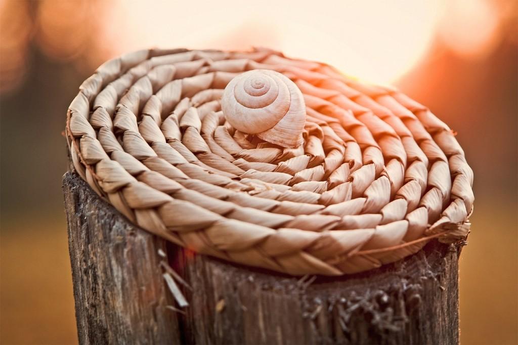 snail-1229894_1280