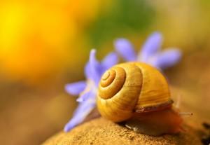 shell-1303027 1920