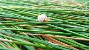 snail-482615 1920